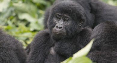 Empfohlene Individualreise, Rundreise: Ruanda & Tansania – Gorilla Tracking & geheimnisvolles Sansibar