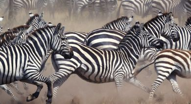 Example private tour: Tanzania and Botswana Safari Highlights
