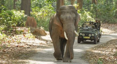 Example private tour: Wild & Urban Jungle Jaunts
