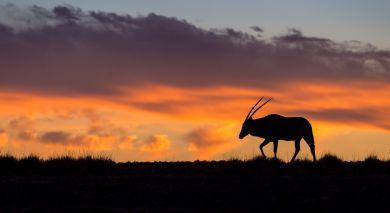Empfohlene Individualreise, Rundreise: Von Sossusvlei zum Caprivi Streifen: Namibias Naturwunder