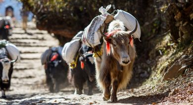 Example private tour: Highlights of the Himalayas: Nepal, Bhutan and Tibet
