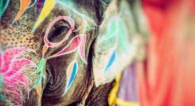 Empfohlene Individualreise, Rundreise: Königliches Nordindien