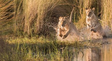 Example private tour: Machaba Safaris Special – Botswana and Zimbabwe