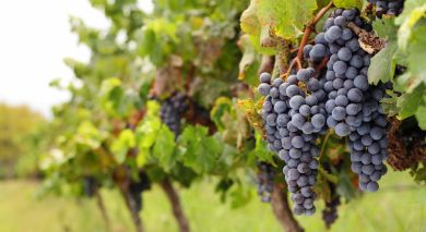 Example private tour: New Zealand: Classic Wine Trail