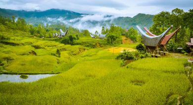 Empfohlene Individualreise, Rundreise: Vergangene Kulturen und Bali
