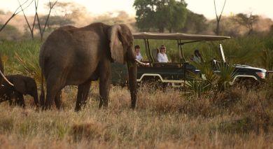 Empfohlene Individualreise, Rundreise: Hoch über Kenia: Safari & Strand