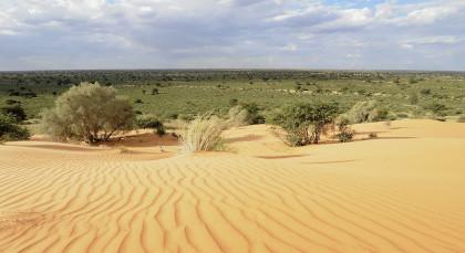 Kalahari Wüste (Namibia) in Südafrika