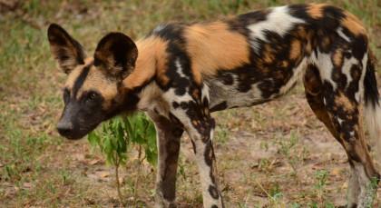 Selous in Tansania