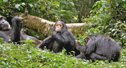 Kibale in Uganda