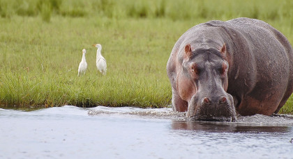 Chobe National Park in Botswana