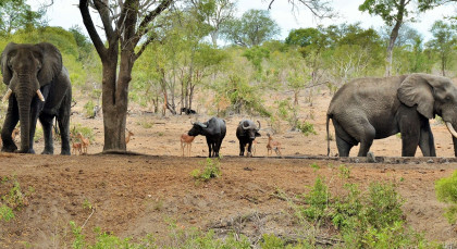 Destination Southern Kruger in South Africa