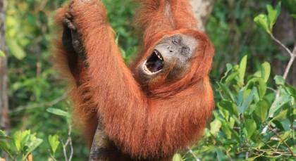 Destination Tanjung Puting National Park, Borneo in Indonesia