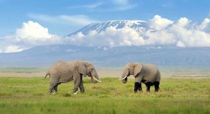 Reiseziel Kilimanjaro in Tansania