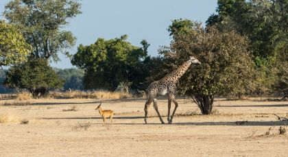 Destination South Luangwa in Zambia