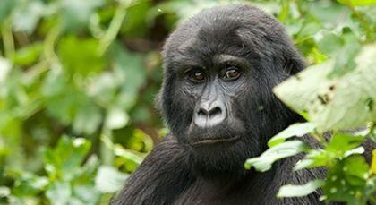 Ruanda Reisen in Afrika