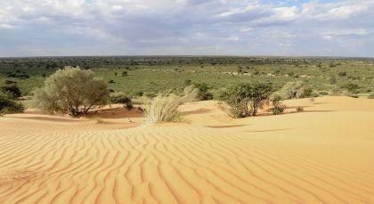 Kalahari Wüste (Nambia) in Südafrika