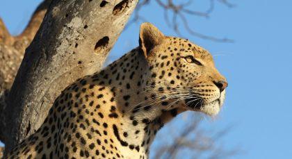 Destination Kruger in South Africa