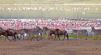 Destination Lake Manyara & Ngorongoro in Tanzania