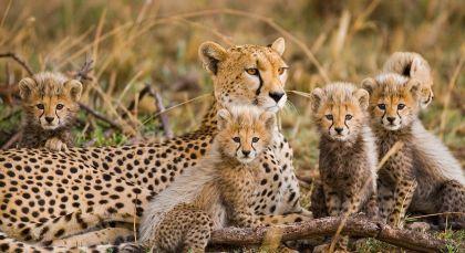 Destination Northern Serengeti in Tanzania