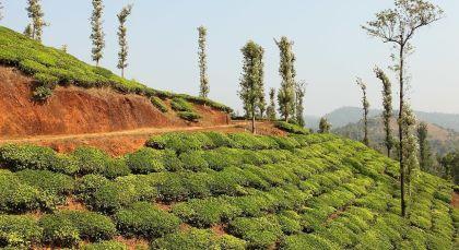 Wayanad in Südindien