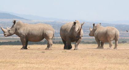 Laikipia in Kenia