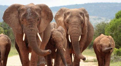 Reiseziel Eastern Cape Wildschutzgebiete in Südafrika