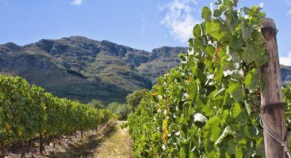 Reiseziel Winelands in Südafrika