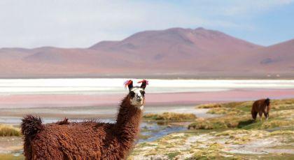 Destination Ojo de Perdiz in Bolivia