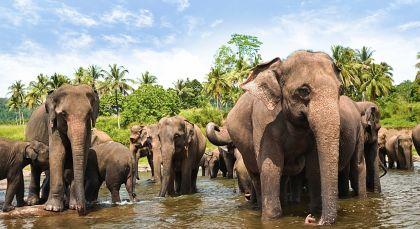 Yala in Sri Lanka