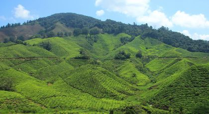 Destination Cameron Highlands in Malaysia