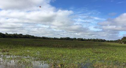 Südliches Pantanal in Brasilien