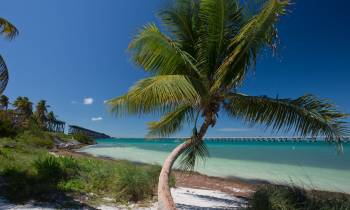 a beach with a palm tree in front of a body of water