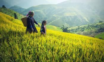 Fields in Cambodia