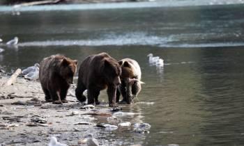 Bear Watching Excursion