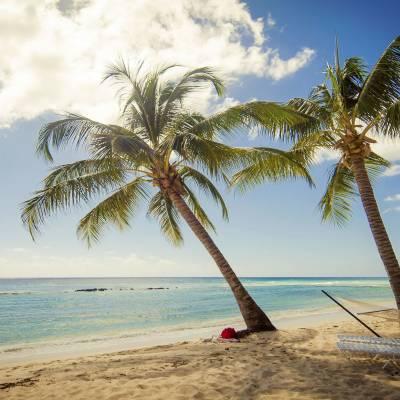 Beach hammocks
