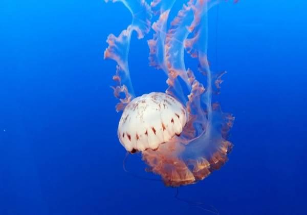 Jellyfish exhibit at the Monterey Bay Aquarium