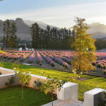Garden at Lavender Farm Guest House in the Winelands, South Africa