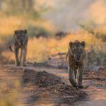 Top 10 Highlights & African Adventures