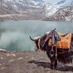 Enchanting Travels India Tours Gangtok Lake