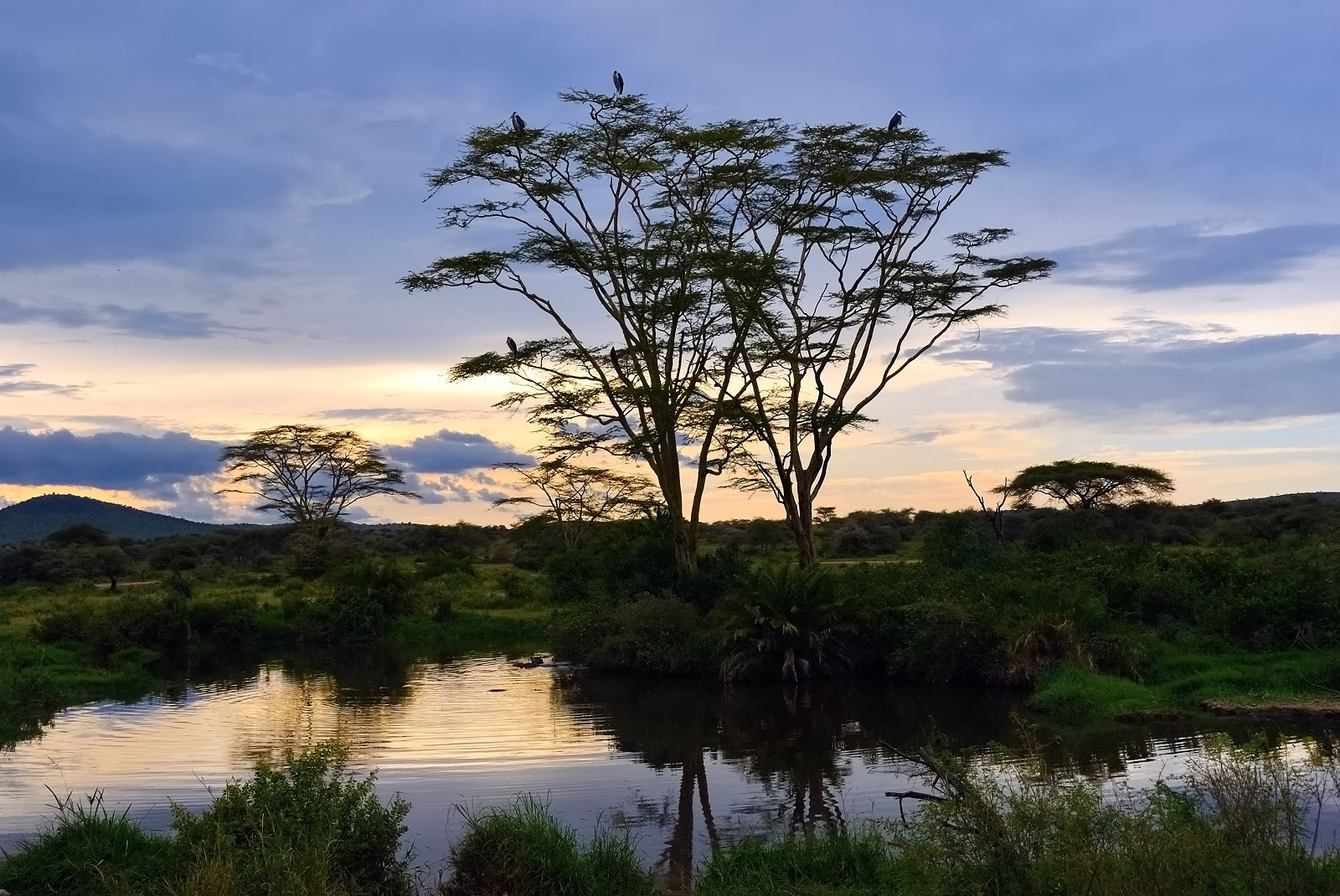 Enchanting Travels Tanzania Tours Serengeti in the evening