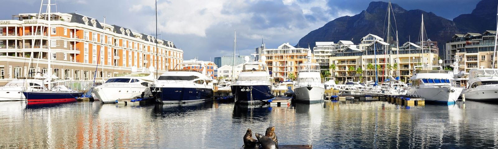 Enchanting Travels South Africa Tours Sea lion on a jetty in Cape Town V&A Waterfront