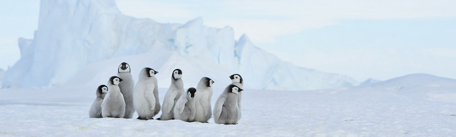 best time to visit antarctica