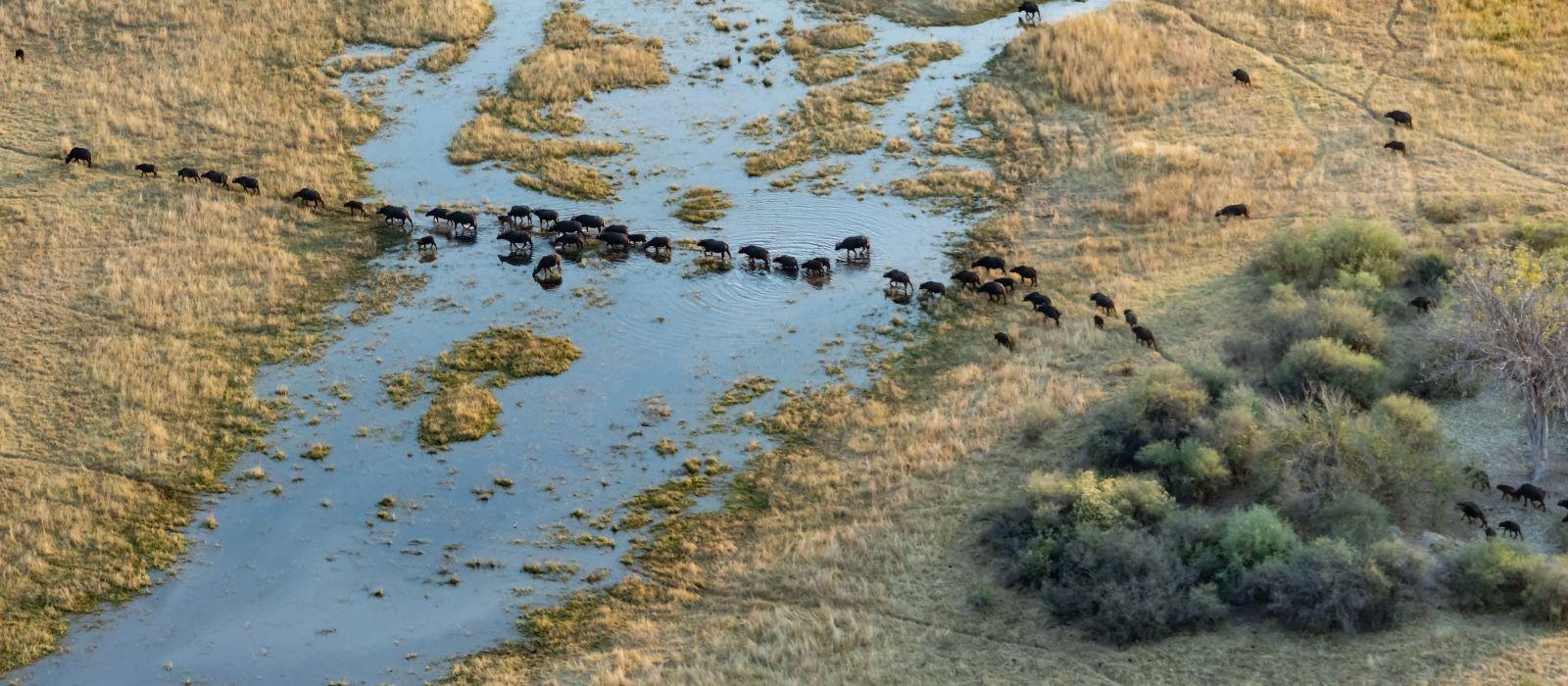Aerial view of Okavango Delta in Botswana, Africafrica