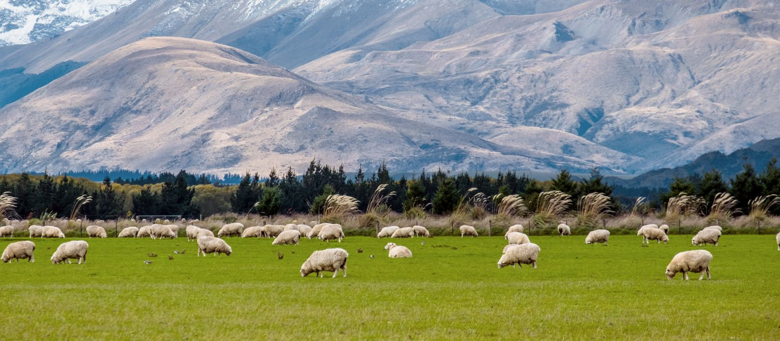 A stunning landscape scene of the agriculture in a rural area in New Zealand