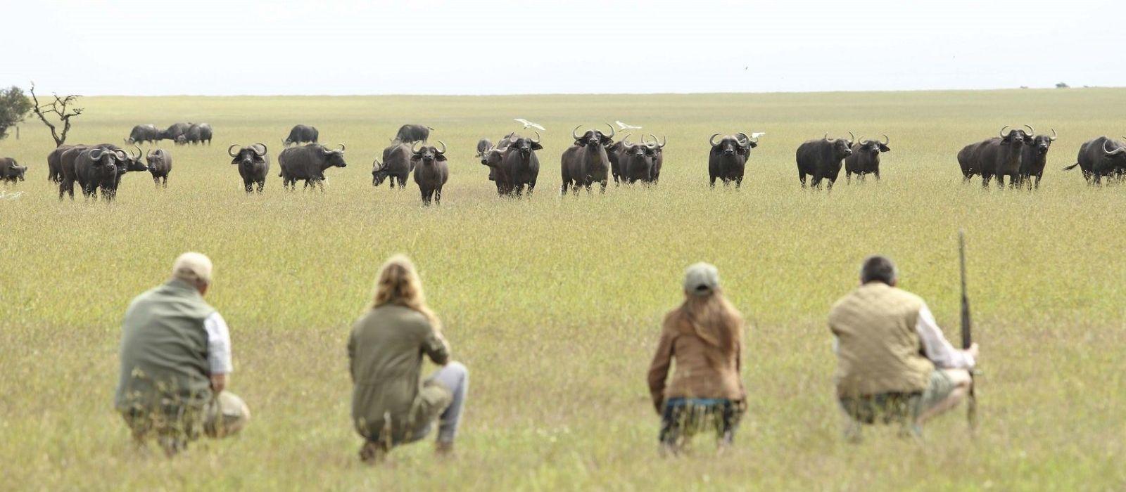 safari trips - Walking Safari Animals
