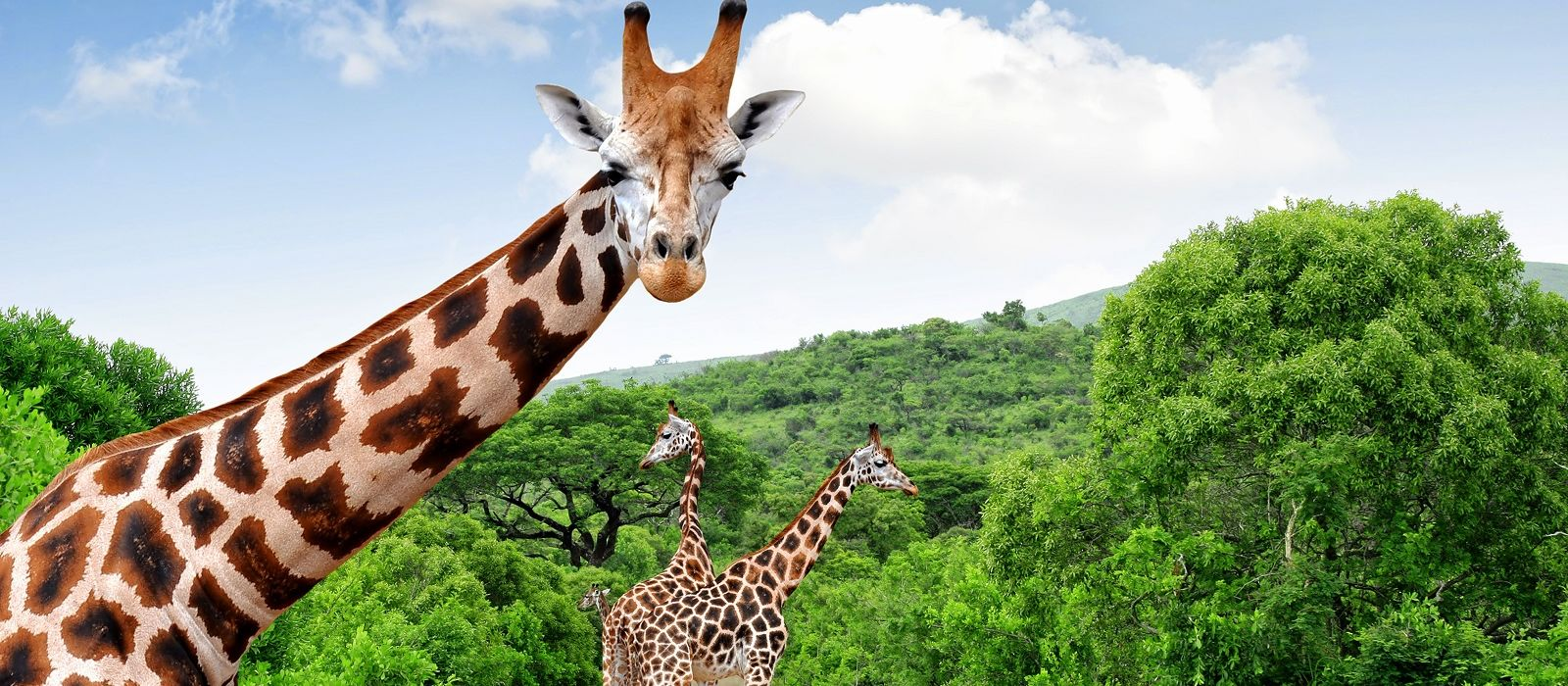 Five Enchanting Experiences for Your Custom Africa Tour