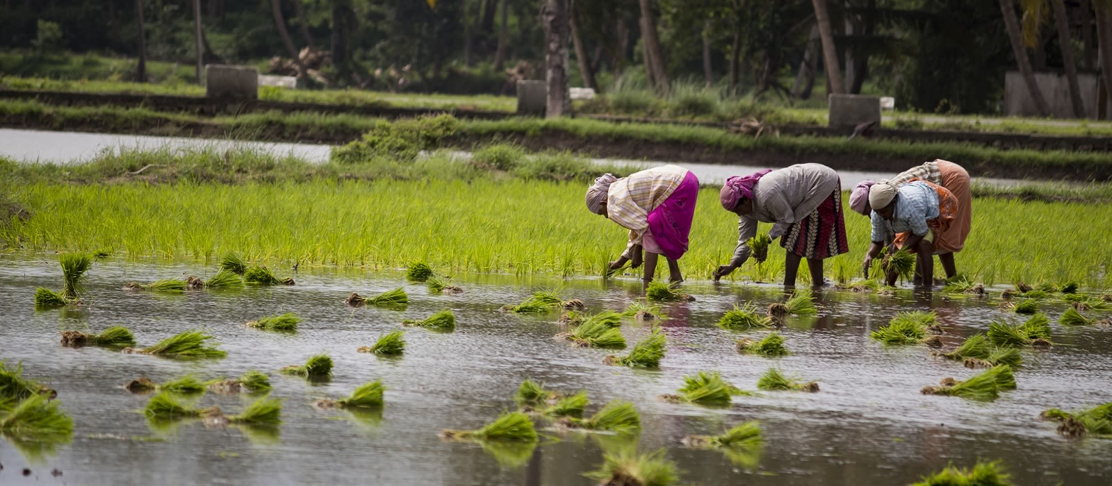 Enchanting Travels South India Vacation Backwaters in Kerala Tour (5)