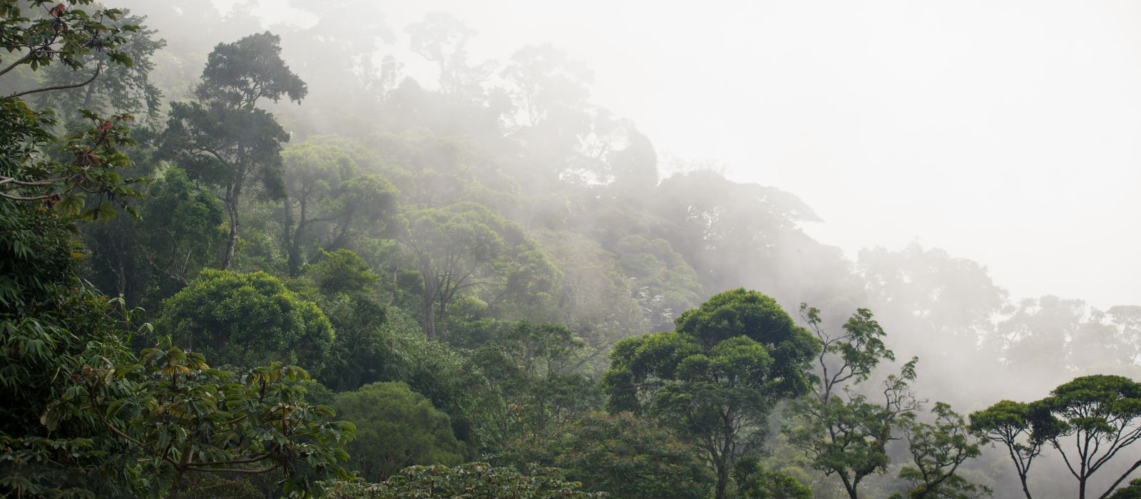 misty jungle forest near Rio at Brazil, South America