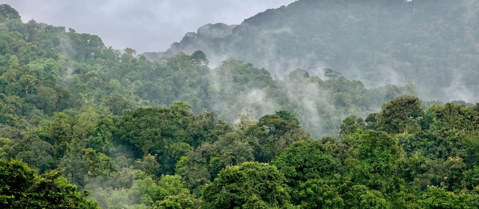 Rainforest Nyungwe, Rwanda, Africa, Landscape