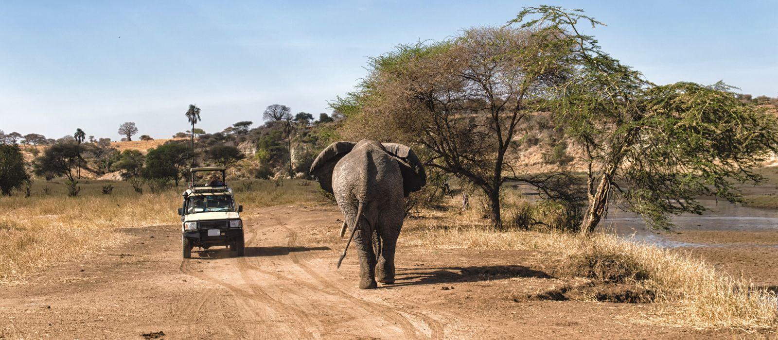 Tourist auf Safari,fotografiert vorbeiziehende Elefanten im Serengeti-Nationalpark, Tansania, Afrika